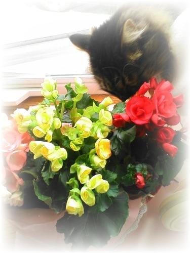 サスとお花1