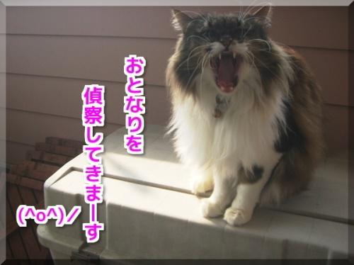 にっかズボン2
