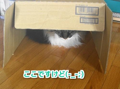 隠れてた2