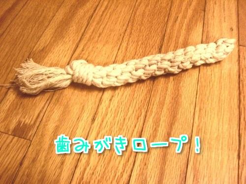 歯みがきロープ