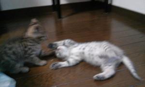 子猫②IMG01934