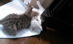 子猫IMG01904