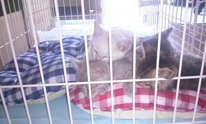子猫4匹 IMG01868