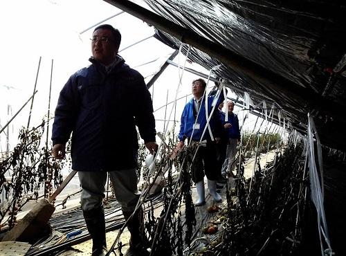 民主党栃木県連≪雪害被害に関する現地調査≫!速報1②