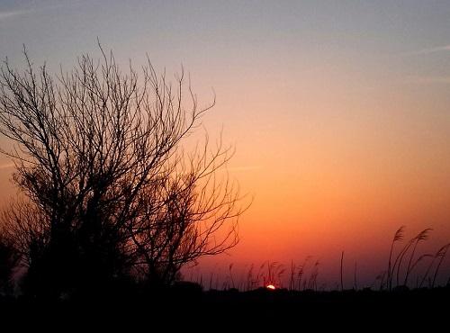 渡良瀬遊水池からの夕陽!③