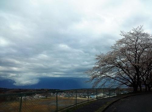 桜の花と雷雲 春の嵐!