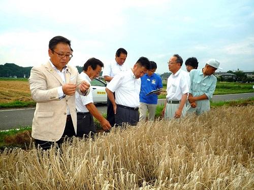 二条大麦等「穂発芽」被害 調査活動と緊急要望!①