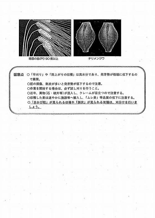 二条大麦等「穂発芽」被害 調査活動と緊急要望!⑩