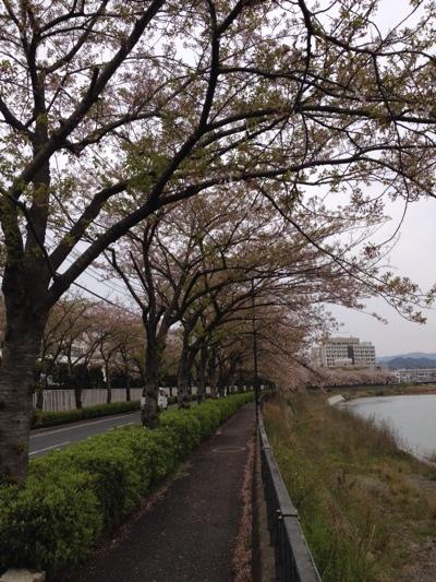 fc2blog_20140407155208e1d.jpg