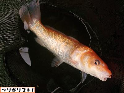 座間養魚場022