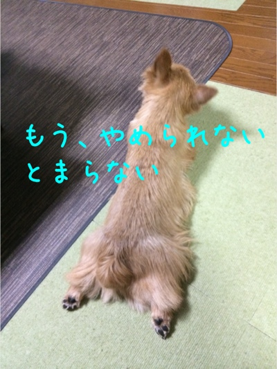 fc2blog_201403191637156f2.jpg