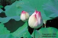Flower2-001.jpg